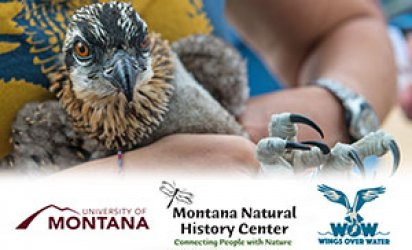 Closeup on an osprey chick being held and banded. A feathered white backdrop covers the lower third. Over it are three logos. From left to right: University of Montana; Montana Natural History Center; Wings Over Water